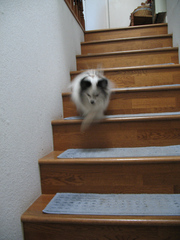With the fluffy stairs I am so swift that I blur your camera.