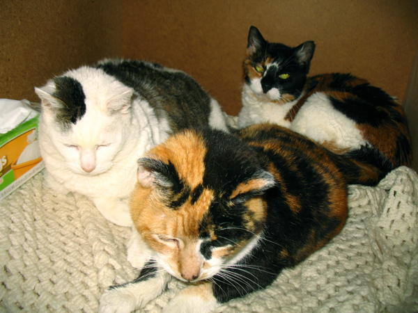 In the linen closet with her sisters.