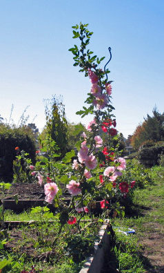 No. 2's garden